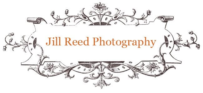 Jill Reed Photography