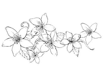 Gambar Bunga Melati Cdr Informasi Seputar Tanaman Hias