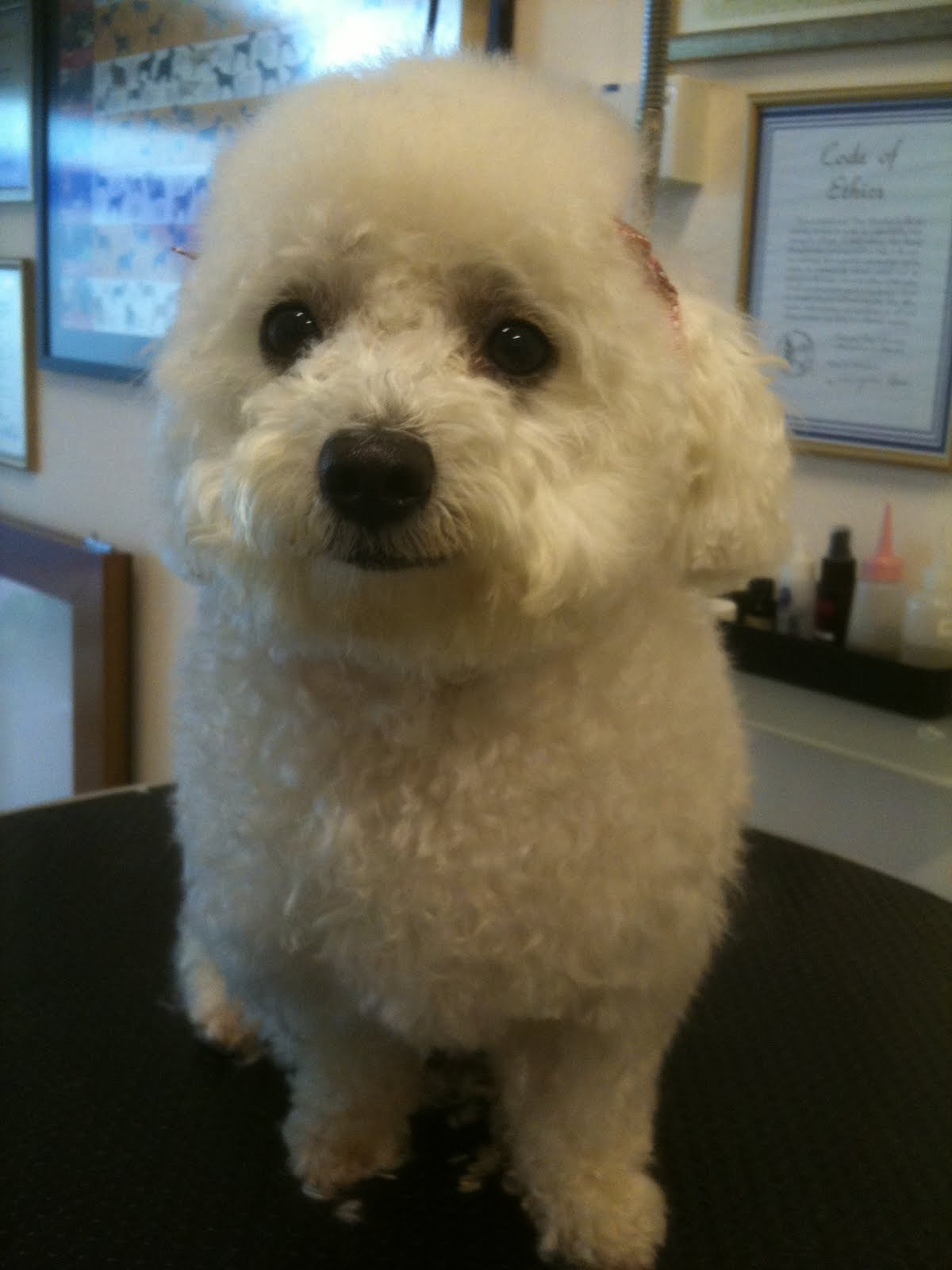 how to learn dog grooming from home