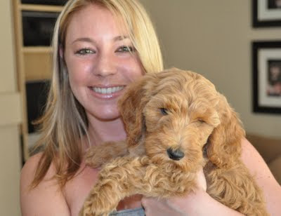 goldendoodle puppies california. Goldendoodle Breeder]