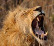 Paarl Safaris & Tours