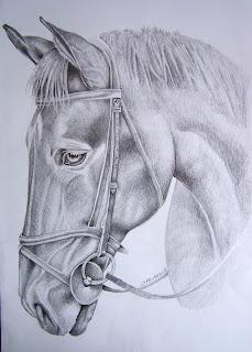 Disegni e ritratti di giuseppe cipriano testa di cavallo matita su carta for Disegni di cavalli a matita