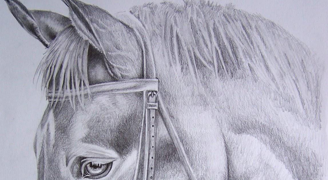 Disegni e ritratti di giuseppe cipriano testa di cavallo for Immagini di cavalli da disegnare