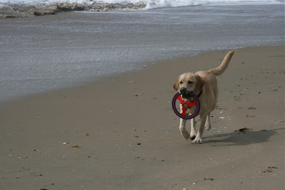 Huntington Dog Beach frisbee fun