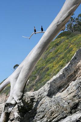 Ocean shore birds