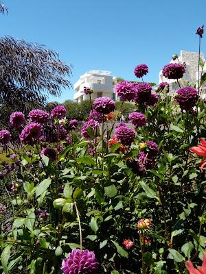 Getty Central Garden flowers