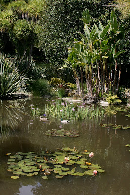 Huntington Lily Ponds