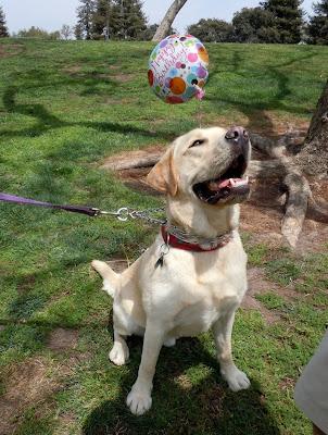 Birthday Cooper
