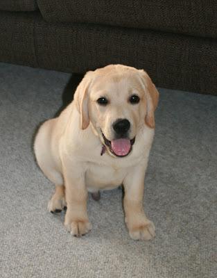 Cooper panting at 11 weeks