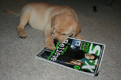 8 week old Cooper just loves SFX magazine