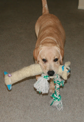 Cooper with a mouthful of toys at 18 weeks