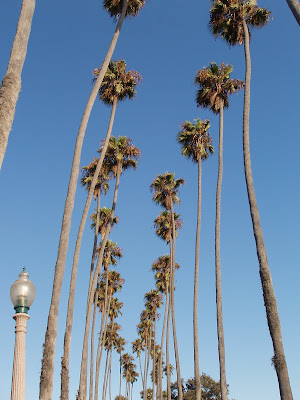 Palm trees of Palisades Park Santa Monica