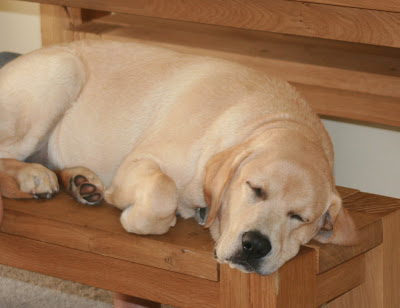 Curled up on the bench