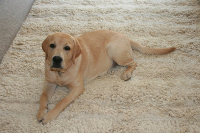 Pup Cooper on the rug