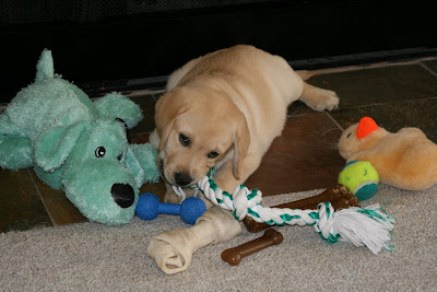 Cooper just hasn't got enough toys