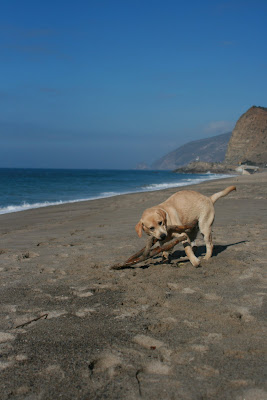 Stick fun at Sycamore Cove beach