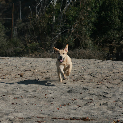 Sycamore Cove pup in motion