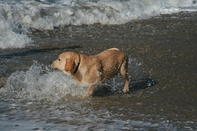 Surf pup