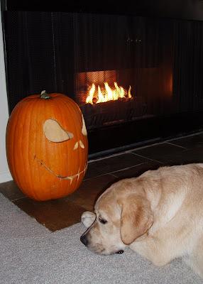 Fireside pup