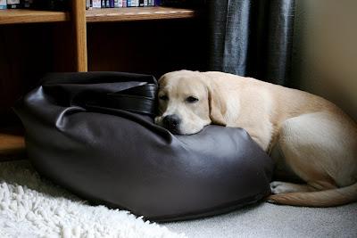 Bean bag pup