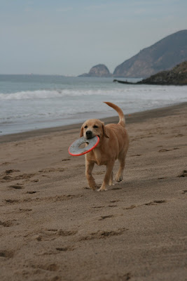 Frisbee beach fun