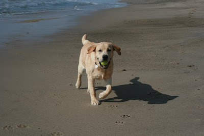 Tennis ball beach fun