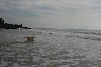 Into the waves chasing the frisbee