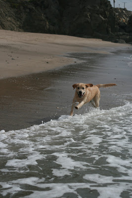 Happy beach pup