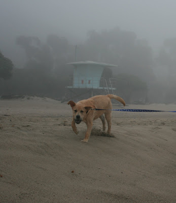 Beach hut pup