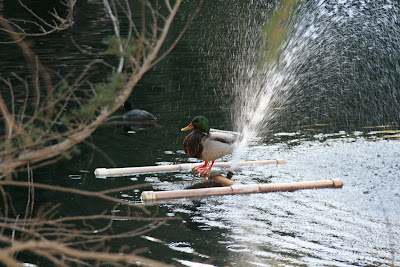 A duck having fun in the Heavenly Pond
