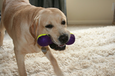 A new toy for pup