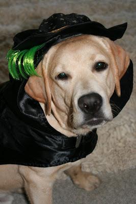 Cooper in his Halloween costume