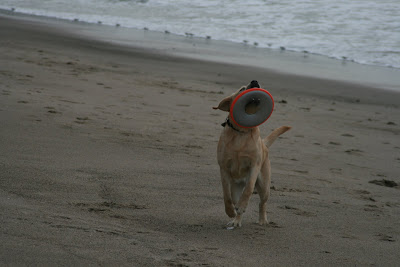 Frisbee fun at the beach with pup