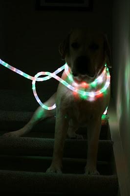Cooper's festive lights