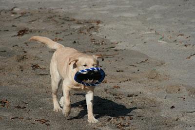 Beach pup Cooper