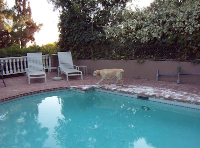 Sniffing around the pool