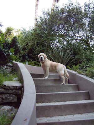 Cooper climbing steps