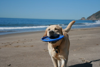 Happy Cooper at the beach