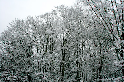 Snow covered Chiswick trees
