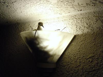 BIrd nest light