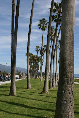 Santa Barbara waterfront palm trees