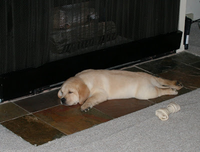 8 week old Cooper on the fireplace tiles