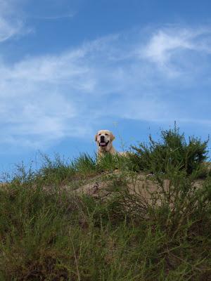 Blue sky pup Cooper