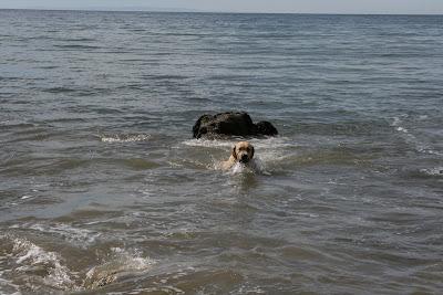 Cooper learning to swim at Arroyo Burro Beach