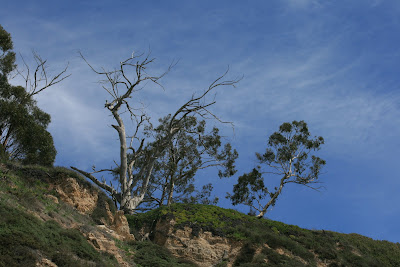 Blue skies over Arroyo Burro Beach in Santa Barbara