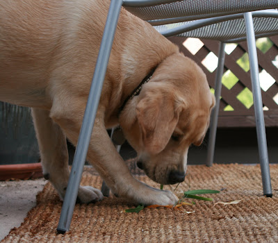 Pup chewing plants