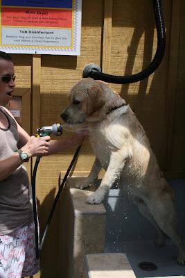 Arroyo Burro Beach dog shower fun