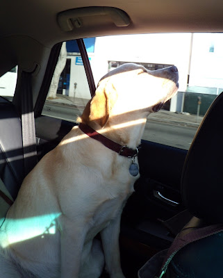 Pup sunning himself in the car