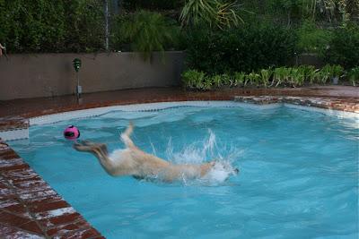 Pool diving Cooper