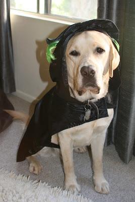Wicked Halloween pup Cooper